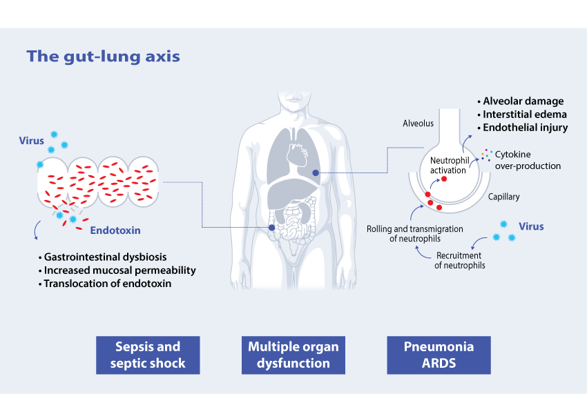 200521-COVID-19-and-the-gut-lung-axis-infographic